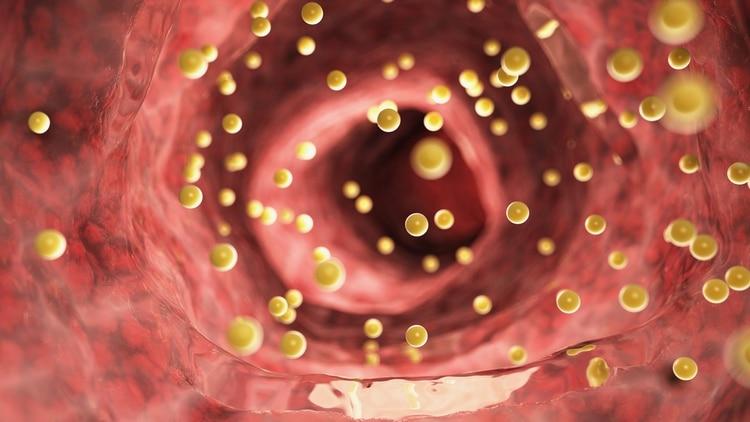Las grasas dentro del torrente sanguíneo (Shutterstock)