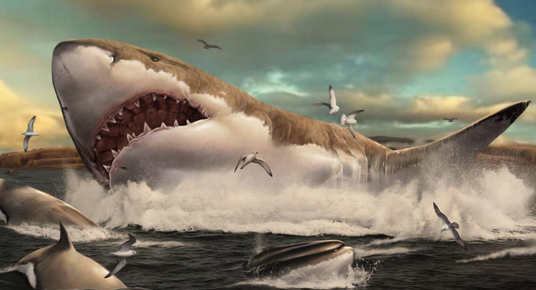 El Megalodón desarrolló sus dientes por hacerse enorme. La evolución de los dientes en el tiburón prehistórico gigante y sus parientes fue un subproducto de volverse enorme, en lugar de una adaptación a nuevos hábitos de alimentación (Foto: Sebastian Carrasco / Europa Press)