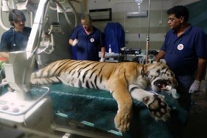 """""""Desde febrero hasta ahora han muerto en este zoo 40 animales"""", lamenta Jalil, uno de los veterinario (Reuters)"""
