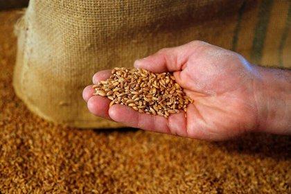 Los cereales deben ser una parte importante de nuestra dieta - REUTERS/Francois Lenoir
