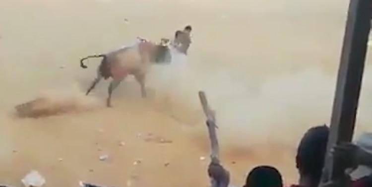 El toro embistió repetidas veces a uno de los asistentes, provocándole graves heridas (Foto: CEN)