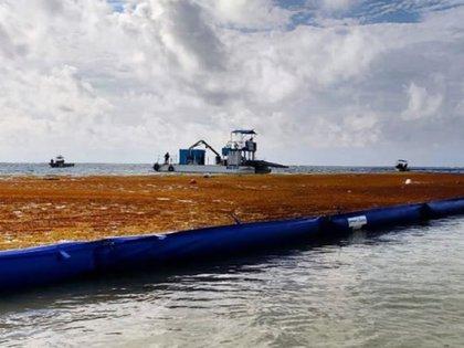 Barrera instalada por Semar en Puerto Morelos contiene el avance del sargazo hacia las playas de la ciudad. Imagen del 19 de junio (Foto: Facebook Observatorio Ciudadano Sargazo)