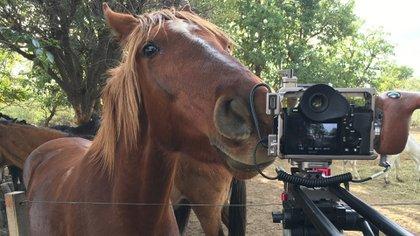 Cinco Corazones revela el cruel negocio de la faena equina. y además muestra imágenes de algunos caballos rescatados y que viven en el Santuario Equidad, en Córdoba.