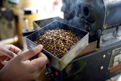 El café es la tercera fuente de ingresos por exportación de Kenia. (REUTERS)