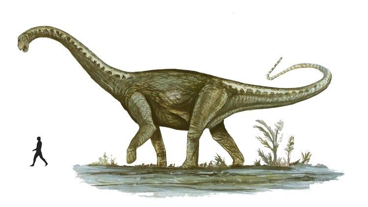 Descubrieron En Mendoza Un Dinosaurio Que Seria El Mas Grande Del Mundo Infobae Los dinosaurios que todos conocemos siempre son gigantes, de tamaños increíbles y con una presencia impresionante que nos asusta y maravilla a la vez. descubrieron en mendoza un dinosaurio