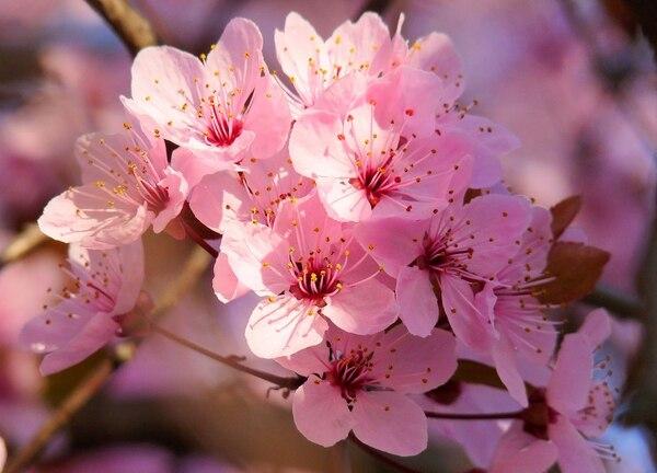 """Los arreglos con flores son unas de las alternativas """"chic"""" para decorar el  hogar"""