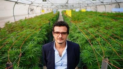 Gaston Morales, presidente de Kannava, agencia estatal creada por Jujuy para producir marihuana en uno de los 9 invernaderos (Foto: Franco Fafasuli)