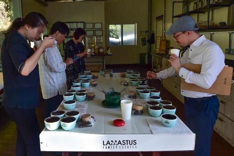 Compradores coreanos prueban variedades de geisha en la finca Elida de Panamá. EL principal mercado de este exclusivo café se encuentra en Asia.