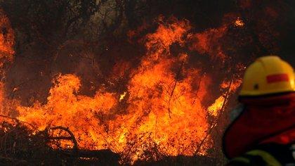 Los incendios han consumido millones de hectáreas en el país andino.(Foto: AFP)