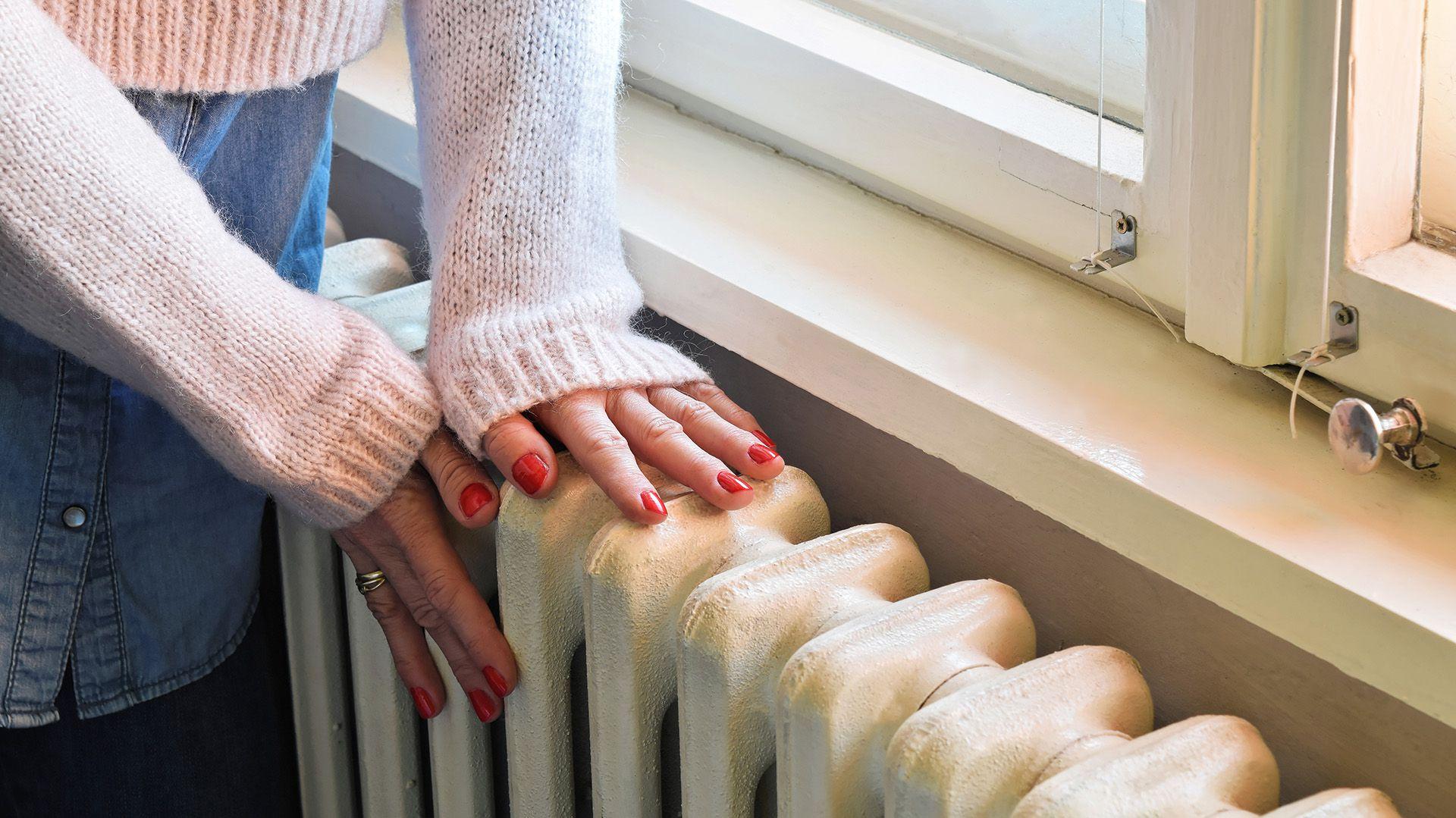 Lo recomendable es que los ambientes estén templados, bien ventilados y que les entre sol (Shutterstock)