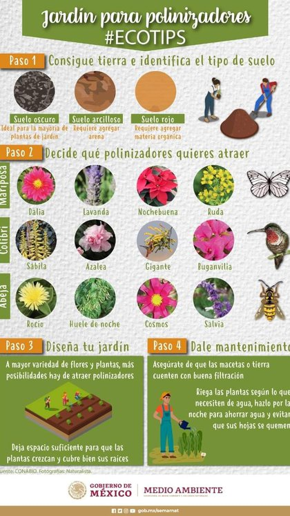Plants that we can place in our window, terrace or garden to help biodiversity and pollinators (Photo: Ministry of the Environment and Natural Resources)