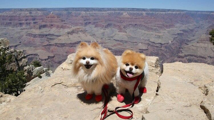 Buddy y Boo