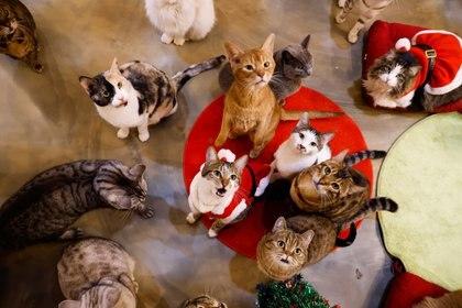 El gato es la mascota del futuro inmediato, sobre todo si tenemos en cuenta que el 52% de la población de las grandes ciudades vive sola (Reuters)