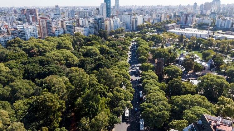 82666140f707 Hay más de 431.326 árboles en la ciudad de Buenos Aires con una gran  diversidad