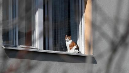Un gato dio positivo por coronavirus en Bélgica