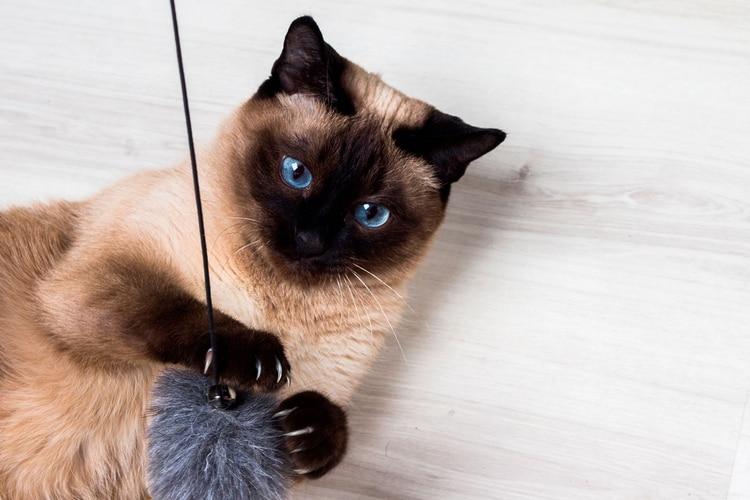 Los nombres Luna y Simón son los más usados para los gatos según el censo (Shutterstock)