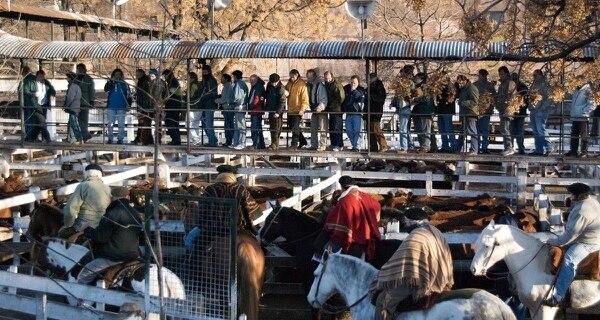 Se confirmó una nueva prórroga hasta diciembre de 2019 para el traslado del Mercado de Hacienda de Liniers a la provincia