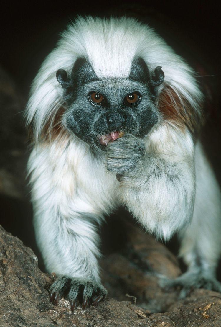 Tunato de Handley. (Foto: Martin Harvey -WWF)
