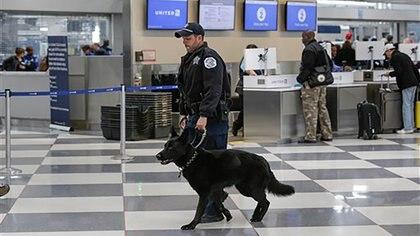 La presencia de perros policía en vuelos privados en EEUU se realiza a petición, dijo testigo (Foto: Archivo)
