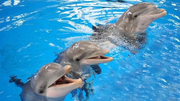 Los humanos intentan comunicarse con los delfines con unos silbatos que emiten pitidos similares a los de los animales