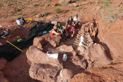 Los huesos observados de este gigantesco saurópodo superan en un 10 o 20 por ciento en tamaño a los de Patagotitan mayorum