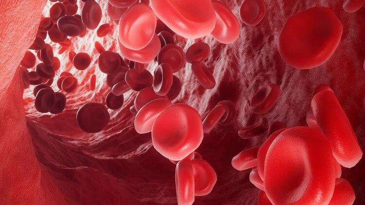 En pacientes con COVID-19 la hemoglobina se altera, no puede transportar oxígeno (Shutterstock)