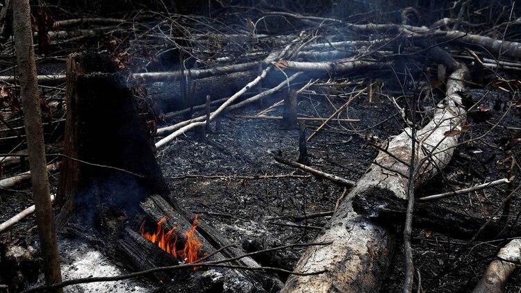Los incendios en el Amazonas (REUTERS/Bruno Kelly)