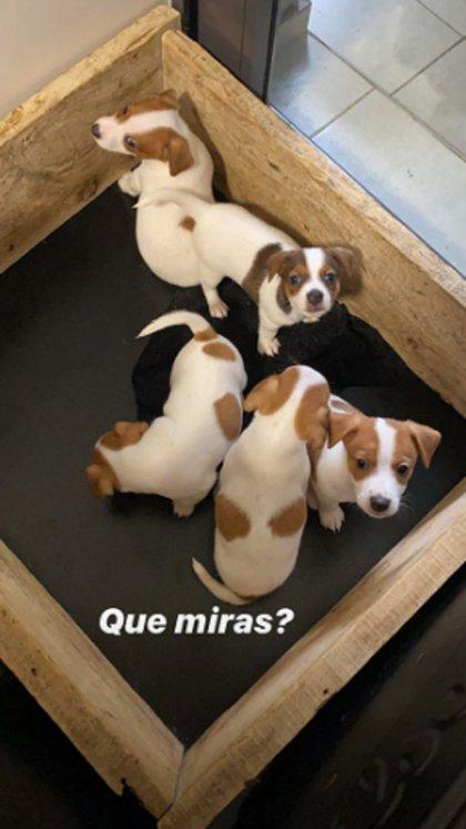 Los cinco cachorros que tuvo la perra de Mica Viciconte (Instagram)