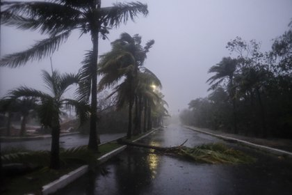 A fallen palm tree left by Hurricane Delta in Cancun, in Cancun, Mexico, Wednesday, Oct. 7, 2020. Hurricane Delta made landfall in Mexico's Yucatan Peninsula on Wednesday as a Category 2 storm, roaring ashore between Cancun and the resorts of Playa del Carmen and Cozumel. (AP Photo/Victor Ruiz Garcia)