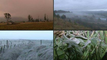 Entre heladas y sol que quema, los campesinos del altiplano agrícola colombiano cuentan las pérdidas en sus tierras.