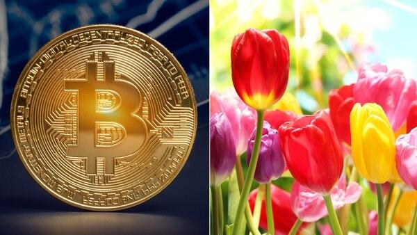 La moneda digital ha sido comparada por expertos con la fiebre de los tulipanes del siglo XVII (Getty)
