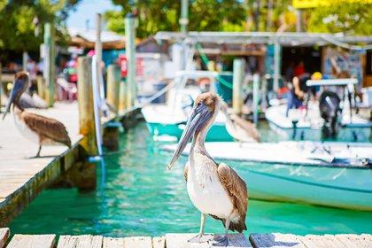 Un año después del huracán Irma, los Cayos de Florida se recuperan, con una serie de aperturas de hoteles que demuestran el atractivo perdurable de la región