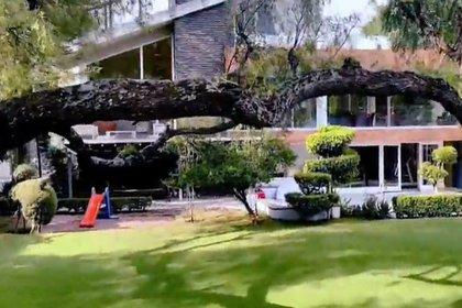 Un enorme árbol es la posesión más preciada de Maribel, según lo compartió en un vídeo (Foto: captura de pantalla)