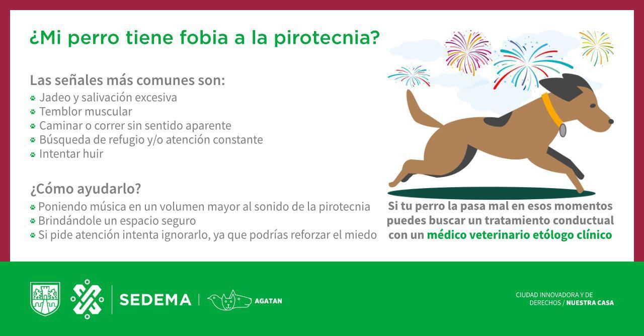 pirotecnia perros (Foto: Twitter@SSC_CDMX)