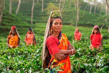 """El propósito de la WWF es plantear un """"Nuevo Acuerdo por la Naturaleza y las Personas"""" para vivir en armonía con el planeta (Pixabay)"""