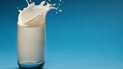 La leche de cucaracha tiene más propiedades que la de la vaca (Shutterstock)