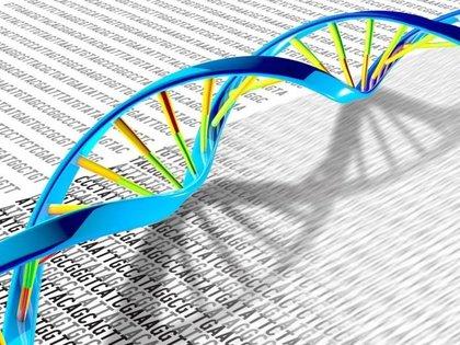 El legado genético en los neandertales, crucial ante el COVID-19 (Europa Press)