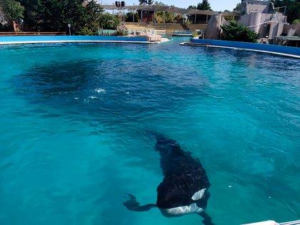 Los animales de los parques acuáticos continúan recibiendo la alimentación y la atención que necesitan. Siguen a cargo de sus cuidadores