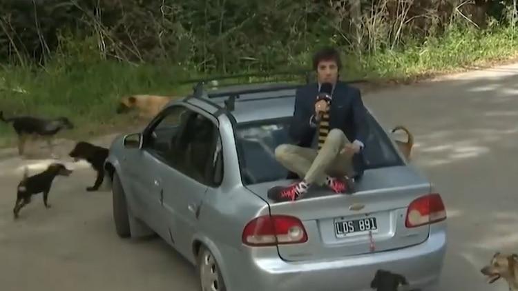 El cronista buscó refugio sobre el baúl de un auto en movimiento para que no se le acerquen los perros