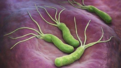 Helicobacter Pylori, una bacteria llena de historia (Shutterstock)
