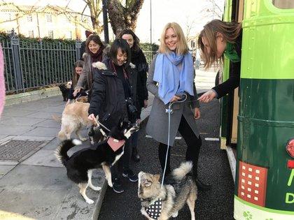 Mascotas con sus dueños disfrutan de las actividades y paisajes que ofrece Londres