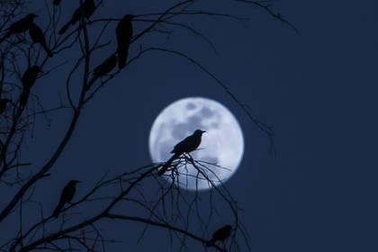 Ahora es conocida como la luna de fresa (Foto: Cuartoscuro)