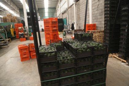Exportación de frutas cayó. (Foto: Cuartoscuro)