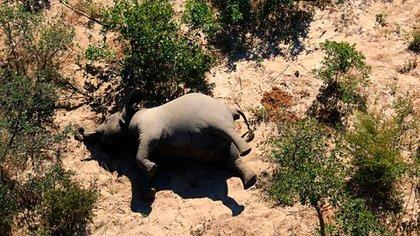 Lugareños manifestaron que han visto a varios elefantes caminando en círculos