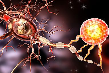 Illustration of an oligodendrocyte, right, creating a myelin coating around a nerve cell extension. Damage to myelin can affect communication between nerve cells. Ralwel/iStock/Thinkstock