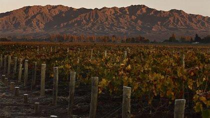 El Valle de Pedernal, el terruño más exclusivo de la cultura vitivinícola argentina