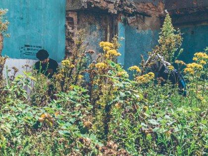 Algunas de las plantas halladas en el antiguo Bronx. Foto:  Jefferson Ortiz / IDPC.