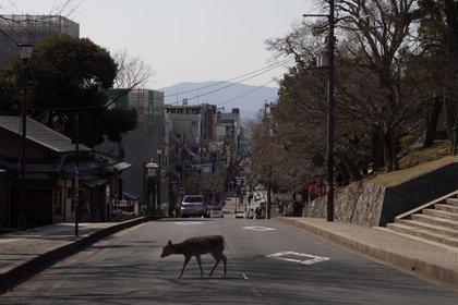 Un ciervo cruza la calle en Nara, Japón (Foto AP / Jae C. Hong)