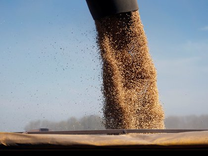 El precio de la soja sigue en alza en el Mercado de Chicago y repercute en el plano local. Los efectos de la mayor de China y la situación climática (REUTERS)