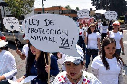Protectoras de animales en el Estado de México marcharon en contra del maltrato animal y las corridas de toros, finalizaron la marcha en la Cámara de Diputados local en donde entregaron un pliego petitorio. FOTO: CRISANTA ESPINOSA AGUILAR /CUARTOSCURO.COM